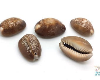 3 large shells type Brown cowrie charm 25 to 30mm (pn53)