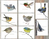 Notecards --Brad's Backyard Birds, Collection #1