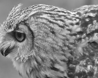 Great Horned Owl photo black and white - print digital download 5x7""