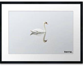Swan Terra