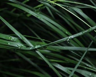 Rain Drops On Grass - Nature Photography