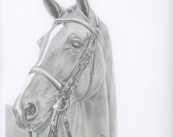 Graphite horse portrait