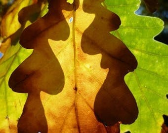 """Poster from a photograph of autumn leaves """"Fall shadows"""" 80x60cm"""