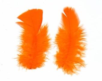 Orange fluff feathers