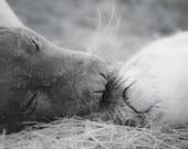 Seal Pup & Mum