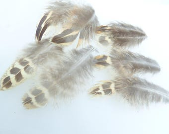 Assortment of small feathers. Set no. 8