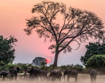 African Elephants At Sunrise Photo Print
