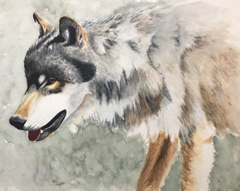 """Wolf. Watercolor. Limited edition giclee print of """"The Yearling"""". Wolf"""