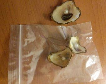 Oyster Earrings and Brooch