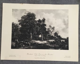 Ruisdael. Old Tree in the Marshes.  1920's antique print
