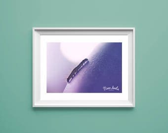 Fine art macro Caterpillar photography print