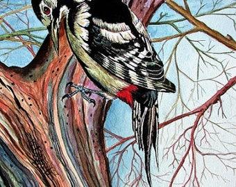 Limited Edition Giclée Fine Art Print by Martin Romanovsky:  Greater Spotted Woodpecker #02/50