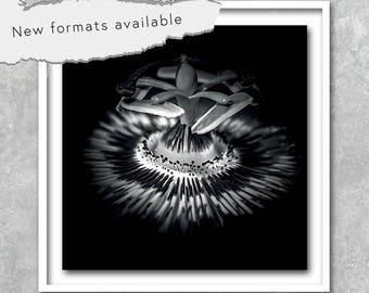 70% OFF poster Passionflower bw photography poster printable instant download 5 X 5 8 X 8 10 X 10 12 X 12 15 X 15 16 X 16 18 X 18 20 X 20 30 X 30 50 X 50