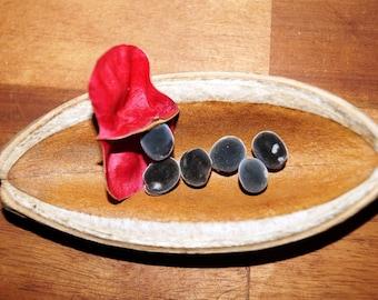 Set of 50 pierced Zanzibar seeds
