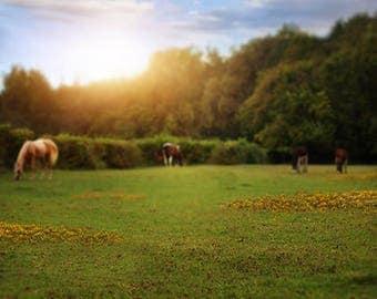 Country Field Horse Digital Backdrop