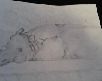 One-horned Rhino Graphite Drawing