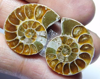 Pair ! Ammonite fossil loose gemstone Amazing cabochon gemstone natural Excellent gemstone 100% Natural 44.00cts (24x19x5)mm 2pieces.