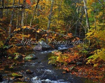Streams and Fall photo Landscape, Beautiful colors limited edition on 8x10 Printed Canvas MasonphotographyCo