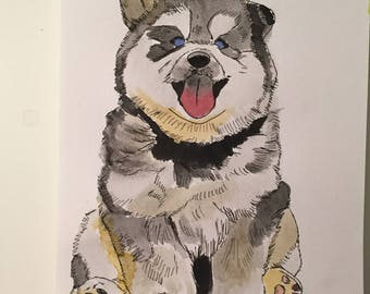 Happy husky puppy