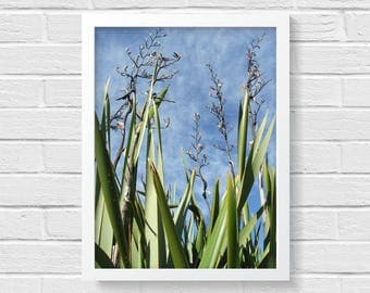 NZ Flax Photo Print, New Zealand, Native Plant, Nature Photography