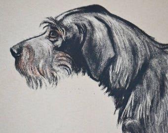 Dog engraving, original, Griffon Korthall, 1937, vintage, brown