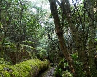 Digital Photo - Otway Rainforest 4 - Victoria Australia