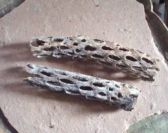 Cholla Cactus Skeleton Wood Stick Pieces for Crafts Assemblage Jewelry Mixed Media Supplies Natural Organic Found Object