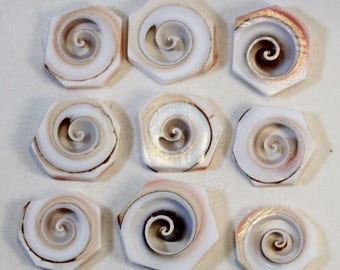 Natural Pink Spiral Shell Hexagon Slice Beads, Wholesale Loose Beads