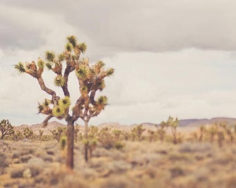 Joshua Tree photograph, desert print, Joshua Tree wall art, southwestern decor, California art print, landscape photo, Myan Soffia