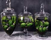 Moss Terrarium Set of 3 Planted Apothecary Jars for Bridesmaid Gifts