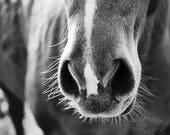 Horse Photograph, Rustic Wall Decor, Farmhouse Decor, Equestrian, Black and White, Farm Photo, Country Life, Nose, Fine Art Photography