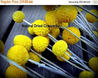 Save25% Craspedia 12 short stem -Billy Balls-Billy Buttons-Dried Yellow Wedding Flowers-Bundle of 12