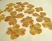 Pressed Dogwood Flowers, Dried Cornus Florida Flowers, Floral Art Craft Supply, Pressed Flower Art, Pressed Brown Flowers, Dried Dogwood