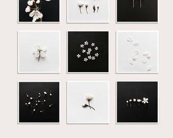 Blossom Print Set, White Blossom on black & white background, Floral wall art, Botanical Prints, Set of 9, Square Art Print, Gallery Wall