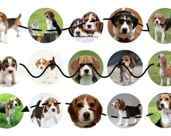 Fifteen one inch circles featuring Beagles