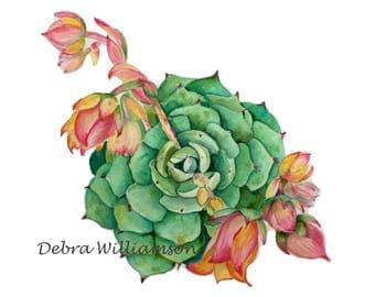 Watercolor Print - Blooming Echeveria - Succulent - Nature Lover - Boho Wall Art - Desert - Botanical - Floral - Art Print - Pink Flowers