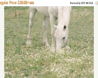 Horse Photograph, White Horse Photo, Horse in Pasture, Farm Art, Equine Print, Farmhouse Decor