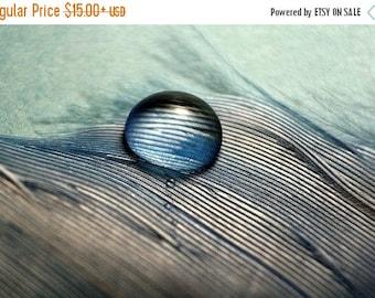 Blue Feather water Drop fine art photography, Still Life Photography, Color Photography, print contemporary art aqua macro