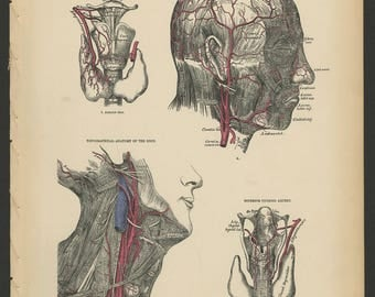 5 Vintage 1880 Human Anatomy Lithograph Print Head, Face, Neck, Muscles, Arteries, Nerves