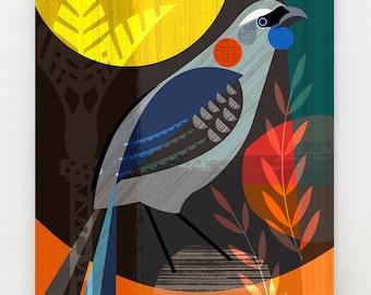 New Zealand, Kokako, bird