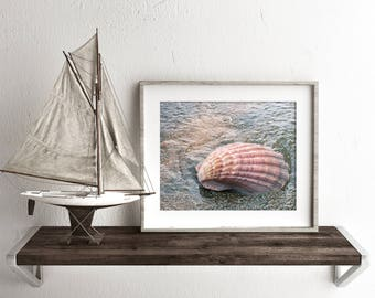 Seashell Photo, Beach Photography, Shell Photo, Seashell Photography, Ocean Decor, Coastal Wall Decor, Nautical Home Decor, Beach Art