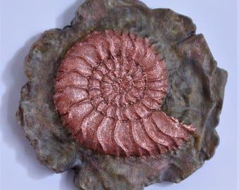 Ammonite Fossil Magnet