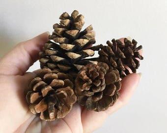 Baby Pine Cones / 47 Mini Found Pine Cones /Pine Cone Crafts / Wreath Making / Natural Christmas Decor / Pine Cone Tree