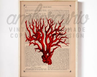 Natural History Red Coral Book Plate Etching Sea Life Print on an Unframed Upcycled Bookpage
