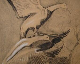 antique charcoal & chalk drawing, birds in flight,X.Georgalas-Greek art. 70 x 50 cms. or 27 3/4'' x 17 3/4''