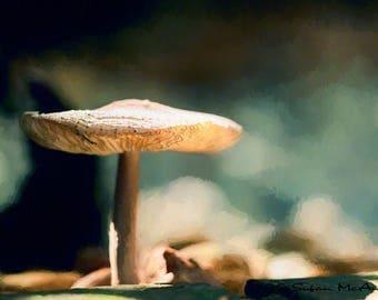 Mushroom Print, Mushroom Art, Art Photo Print, Nature Photograph, Mushroom Photo, Nature Art, Wall Art, Home Decor, Sombrero, Brown, Blue