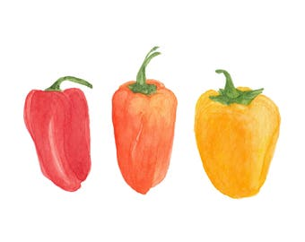 Mini Bell Peppers - Red, Orange, & Yellow / Watercolor Illustration / Food Illustration / Art Print / Giclée Print / Wall Art / Home Decor