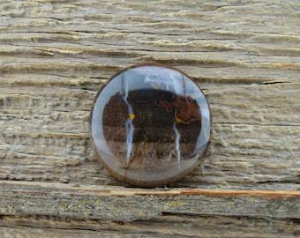 Round Petrified Wood Cabochon