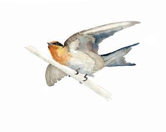 Welcome Swallow Watercolour Print, Australian Bird Fine Art Print, Small Bird Painting of Perching Bird