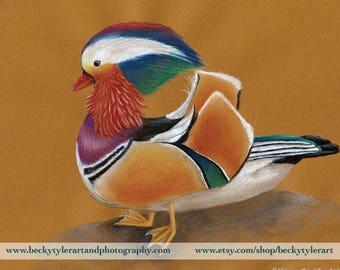 Mandarin Duck Original Drawing